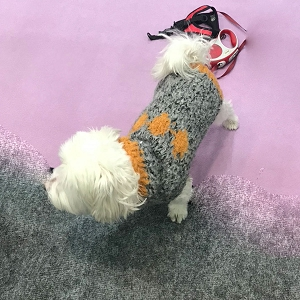 Hand Knit Diamond Dog Sweater